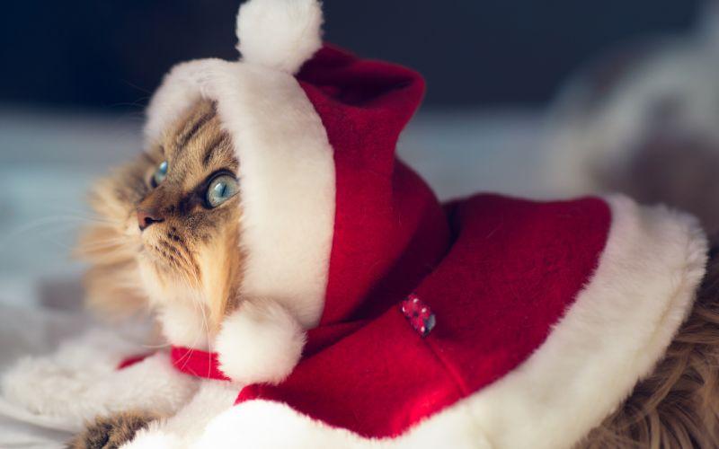 holidays christmas seasonal cats wallpaper