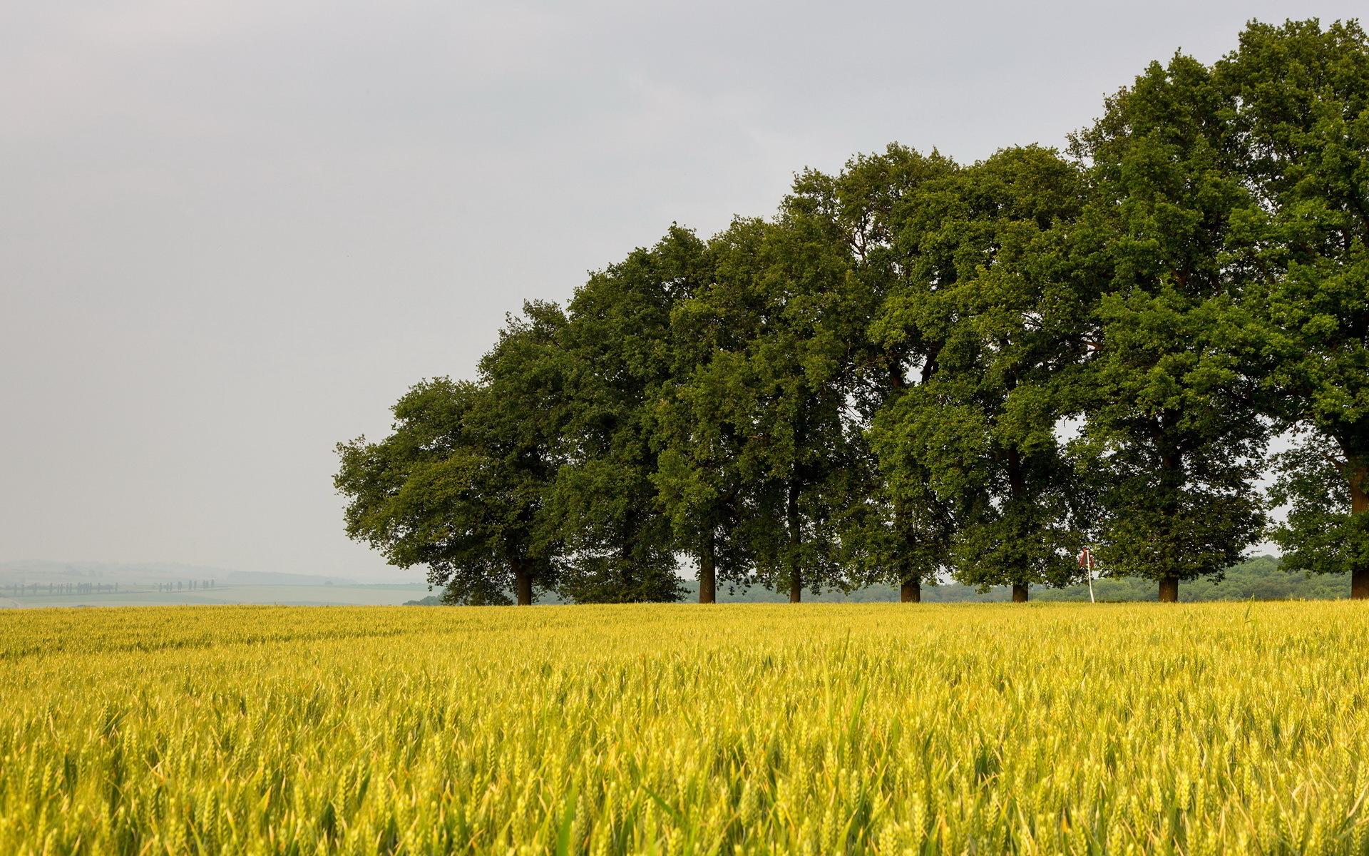 поле дерево  № 3020594 бесплатно