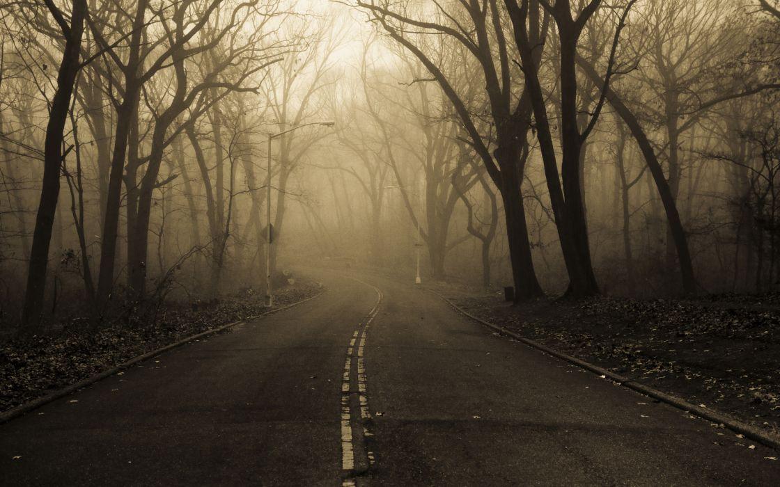 landscapes nature roads trees forest fog mist haze dark spooky autumn fall seasons wallpaper