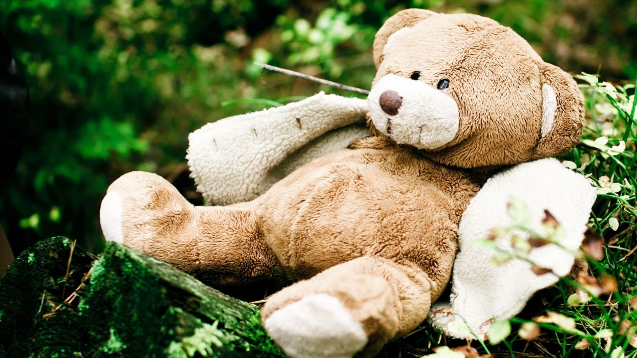 teddy bear toys stuffed cute children humor funny photography wallpaper