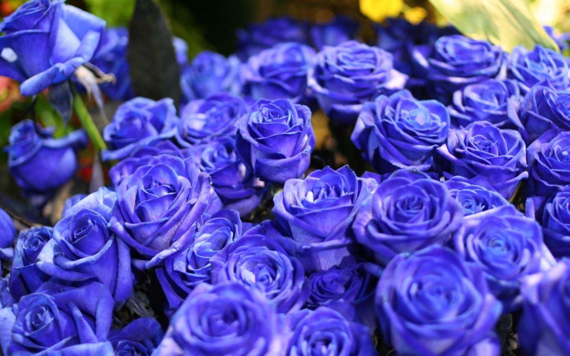 bouquet nature flowers blue macro close up wallpaper