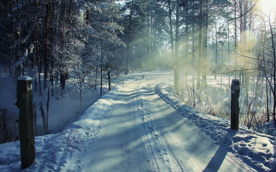 nature landscapes winter snow roads morning sunrise sunlight sunbeam animals dogs seasons wallpaper