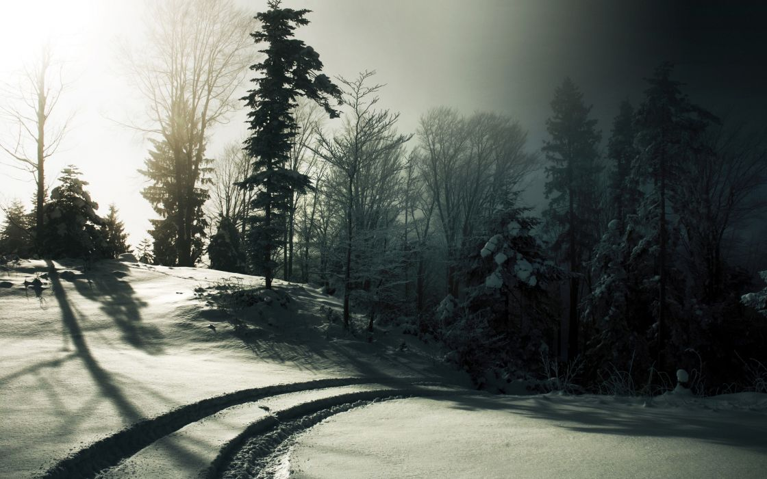 nature landscapes winter snow seasons trees forest sunlight sun light haze fog mist path roads wallpaper