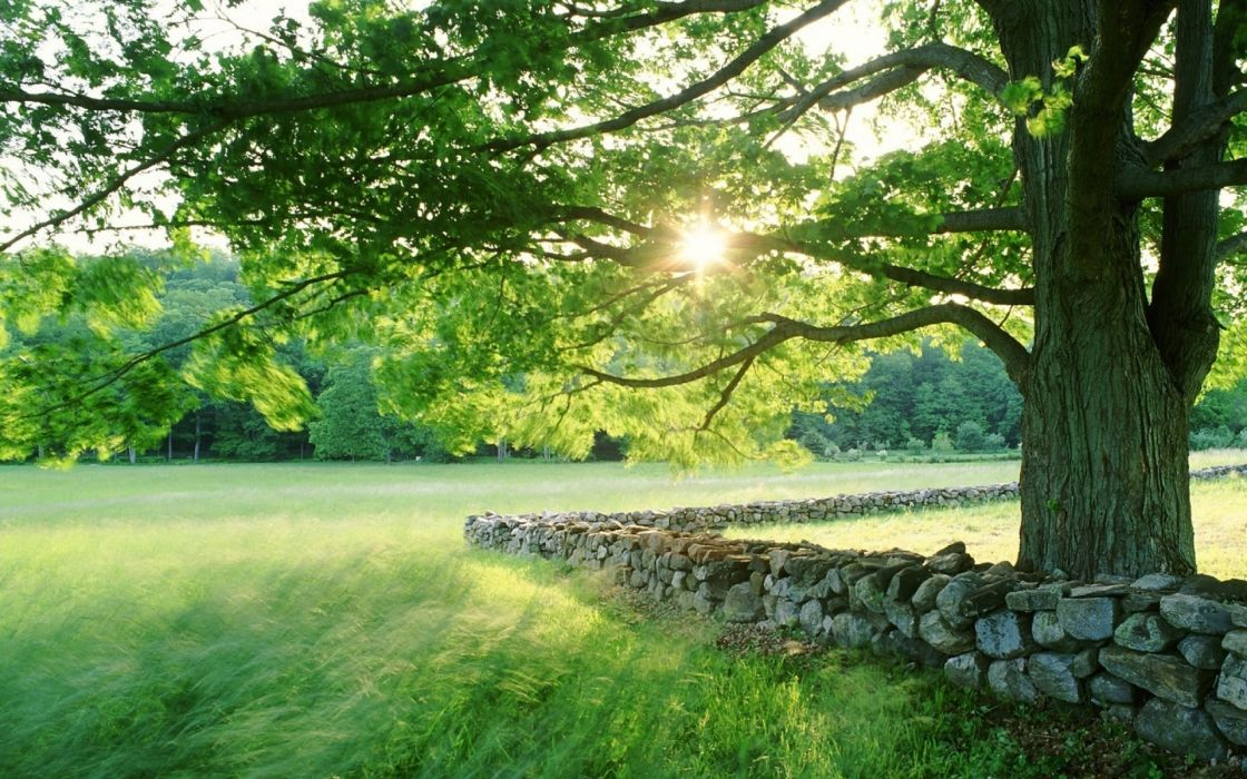 nature landscapes fields grass trees sun sunlight spring seasonal stone fence rocks leaves wallpaper