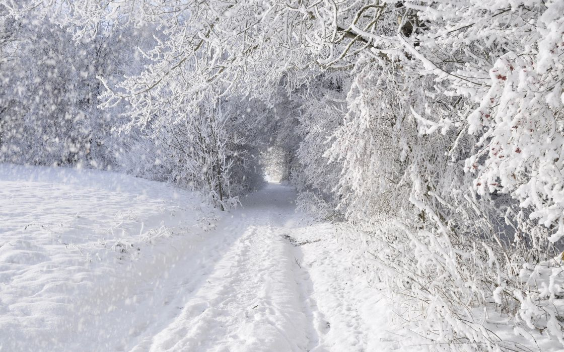 nature landscapes winter snow snowing snowflake snowfall roads trees forest storm blizzard white seasons tunnel wallpaper