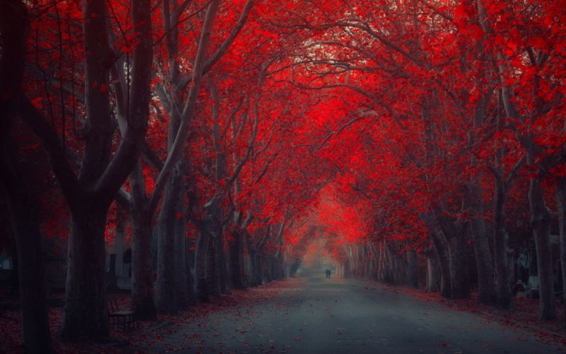 nature landscapes roads path trees park forests leaves autumn fall seasons people couple love romance mood emotion art artistic painting colors red wallpaper