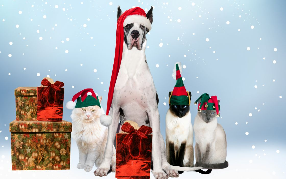 holidays christmas seasonal dogs wallpaper