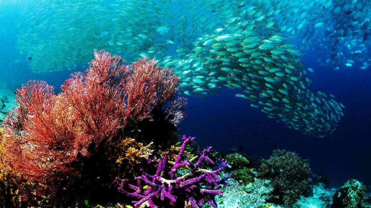 animals fishes underwater water ocean sea colors school swim reef life nature detail photography wallpaper