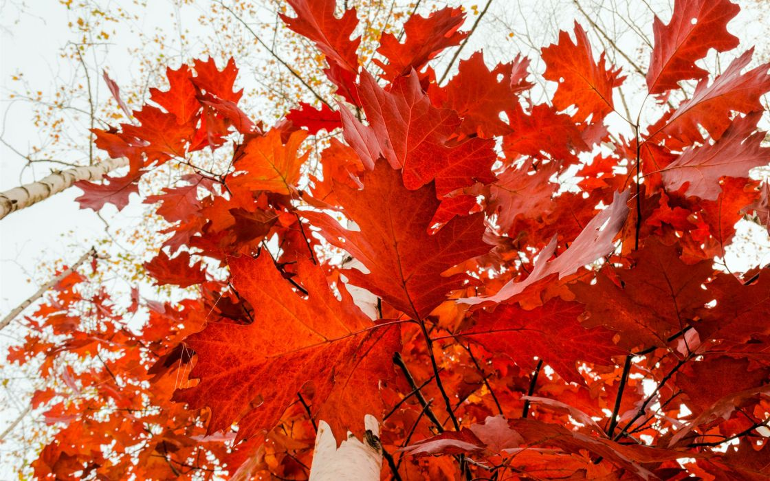 nature leaves trees forest red autumn fall seasons sky contrast bokeh wallpaper