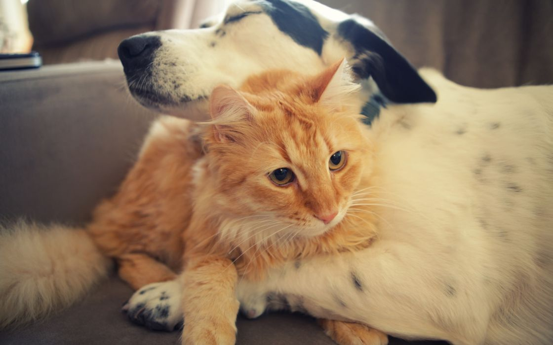 animals dogs cats whiskers fur embrace love friend paws face yes ears nose cute sleep photography hug mood emotion wallpaper