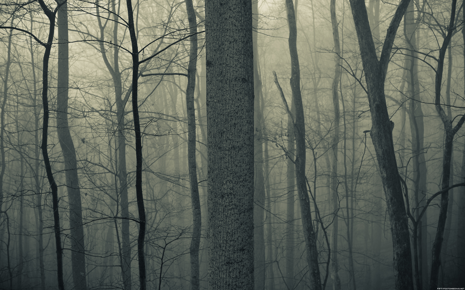Nature Trees Forests Woods Trunk Haze Fog Mist Dark Bark Spooky Creepy Autumn Fall Seasons Wallpaper