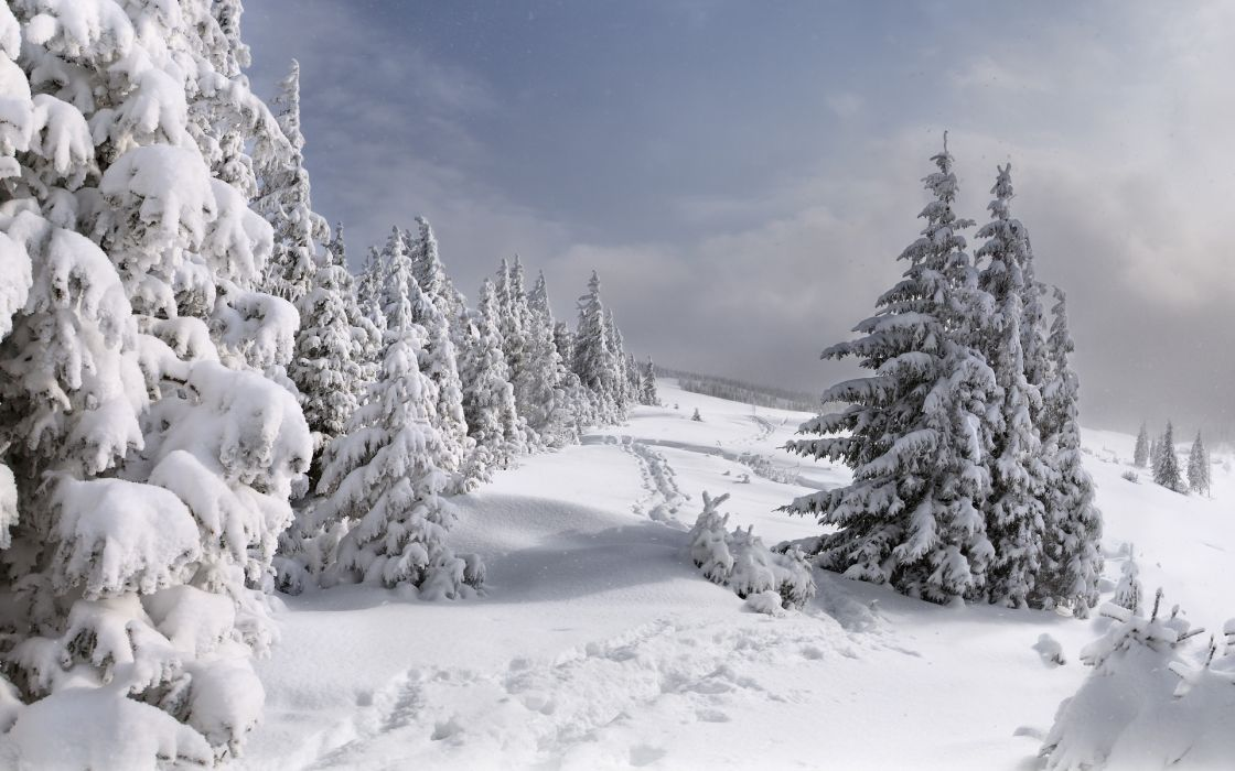 nature landscapes winter snow seasons trees mountains sky clouds white path roads steps tracks wallpaper