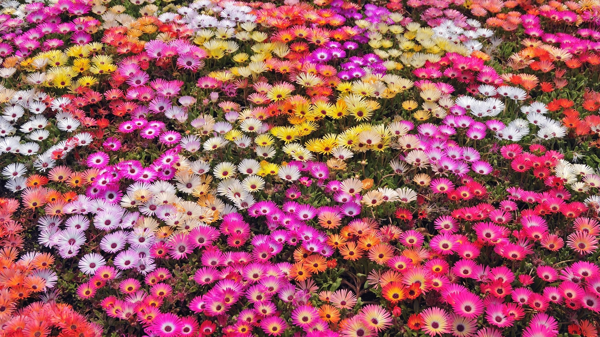 Nature flowers garden petals colors abstract plants - Plants with blue flowers a splash of colors in the garden ...
