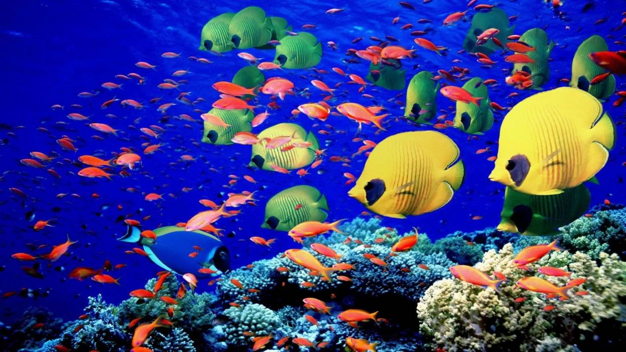animals fishes underwater swim coral reef colors bright sea life wallpaper