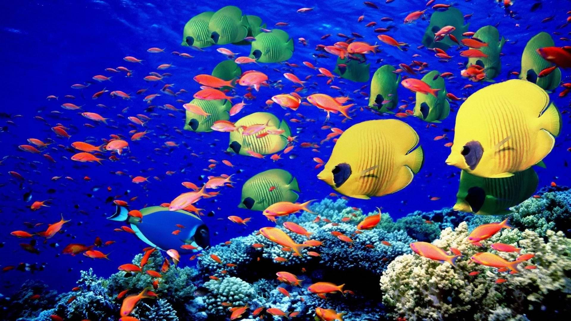 Caribbean Sea Creatures: Animals Fishes Underwater Swim Coral Reef Colors Bright