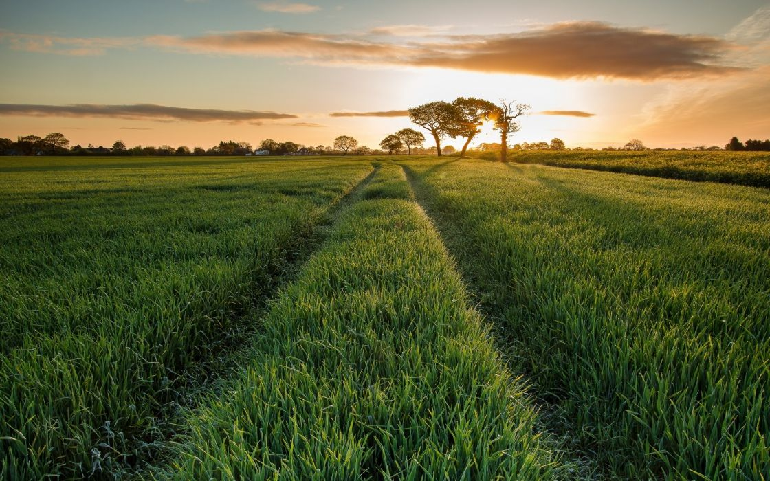 nature landscapes fields grass scenic roads path tracks trees sky clouds sunset sunrise wallpaper