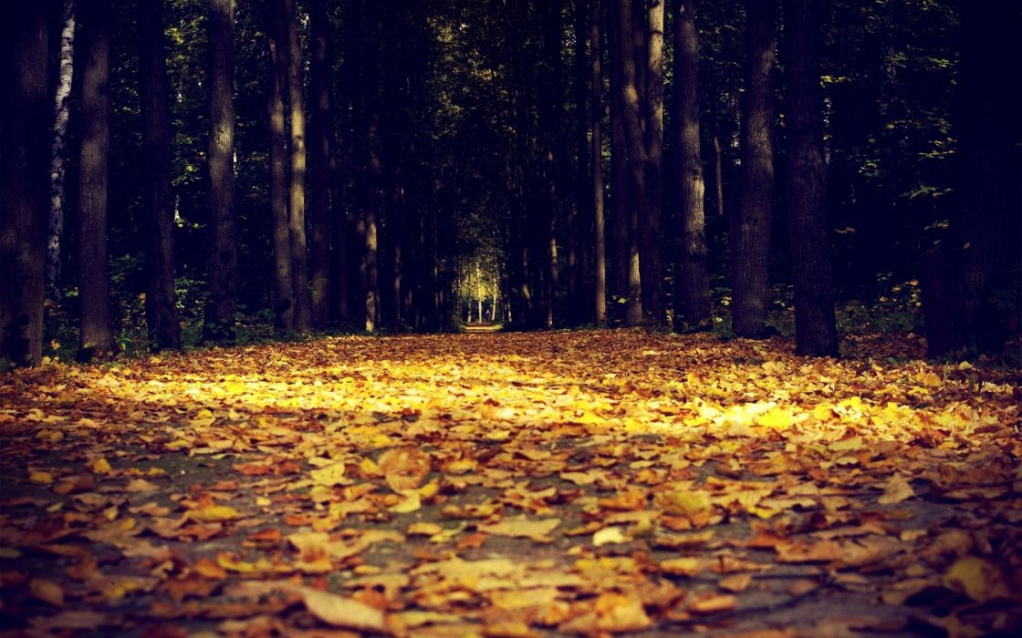 nature leaves trees forests autumn fall seasons tunnels sunlight color path roads sidewalk park macro wallpaper