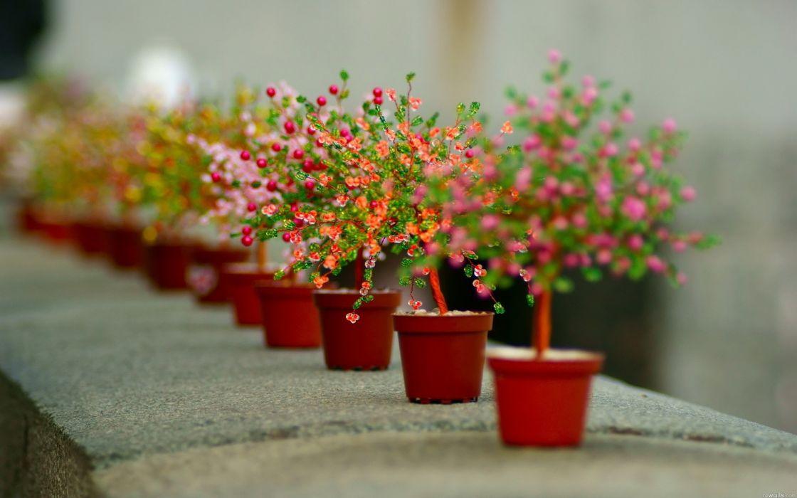 nature flowers macro pots vases colors plants petals wallpaper