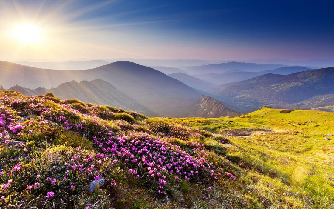 nature landscapes mountains hills plants flowers grass meadow scenic haze sun sunlight sky view wallpaper