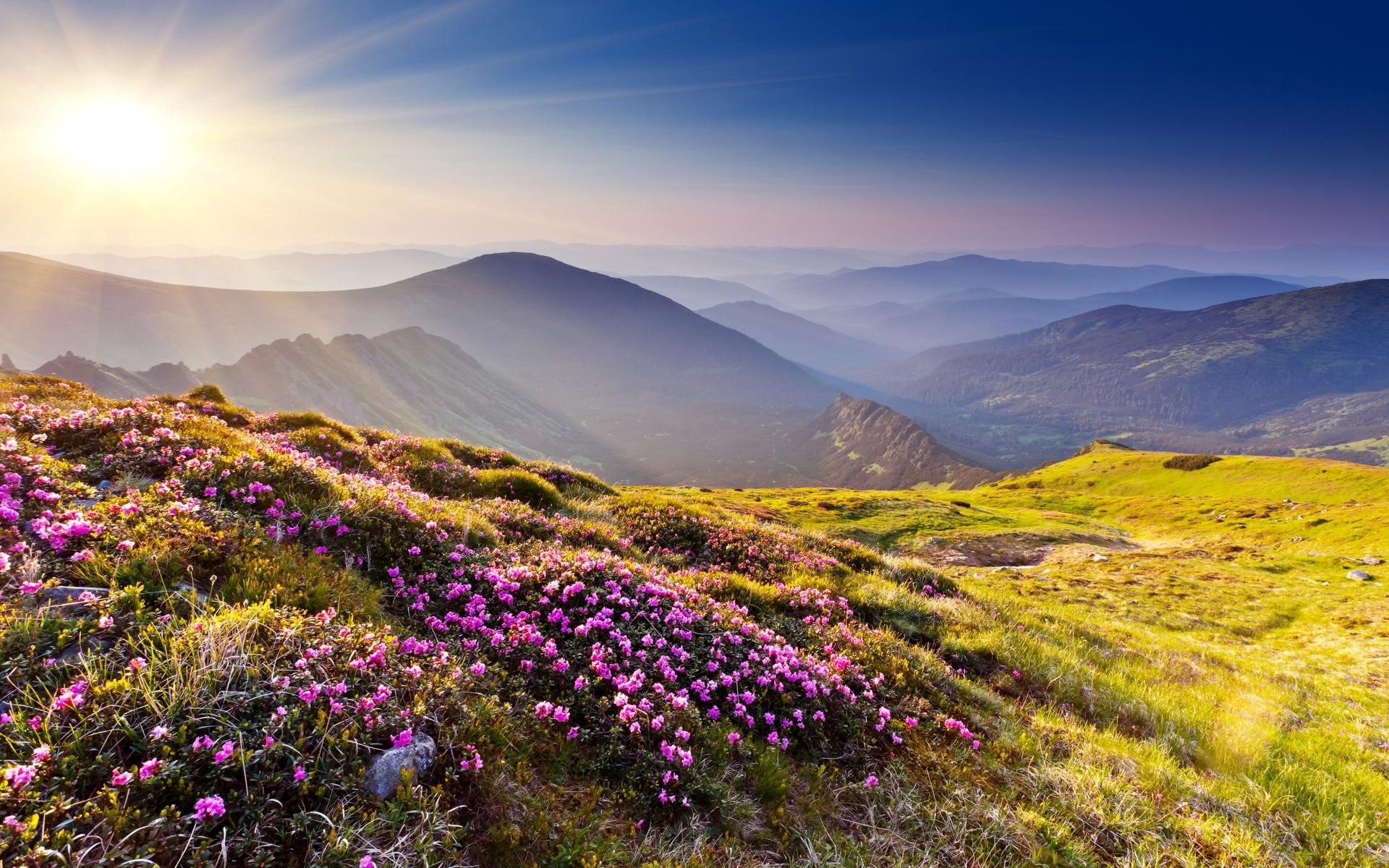 поляна цветы трава холмы горы glade flowers grass hills mountains  № 1829238 без смс
