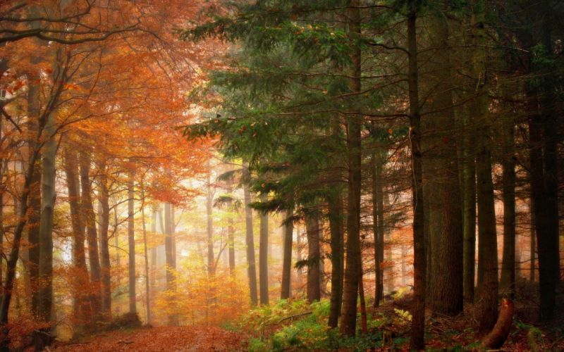 nature landscapes trees forests leaves wood path traks autumn fall seasons color sunlight wallpaper
