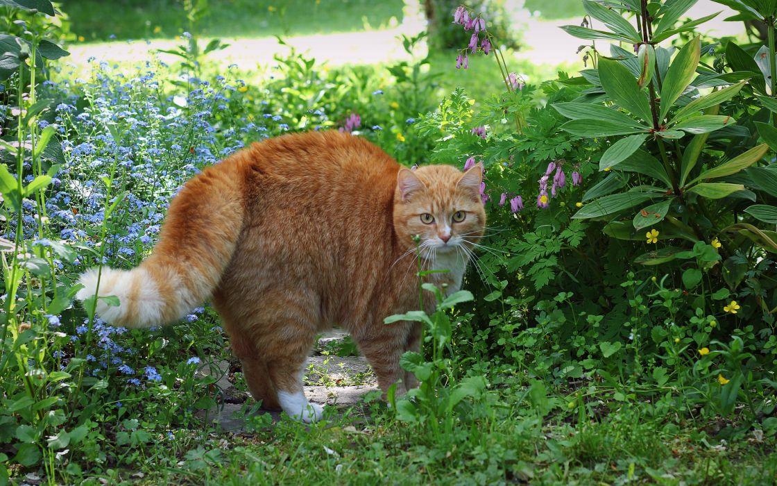 animals cats felines garden nature flowers plants fur whiskers wallpaper