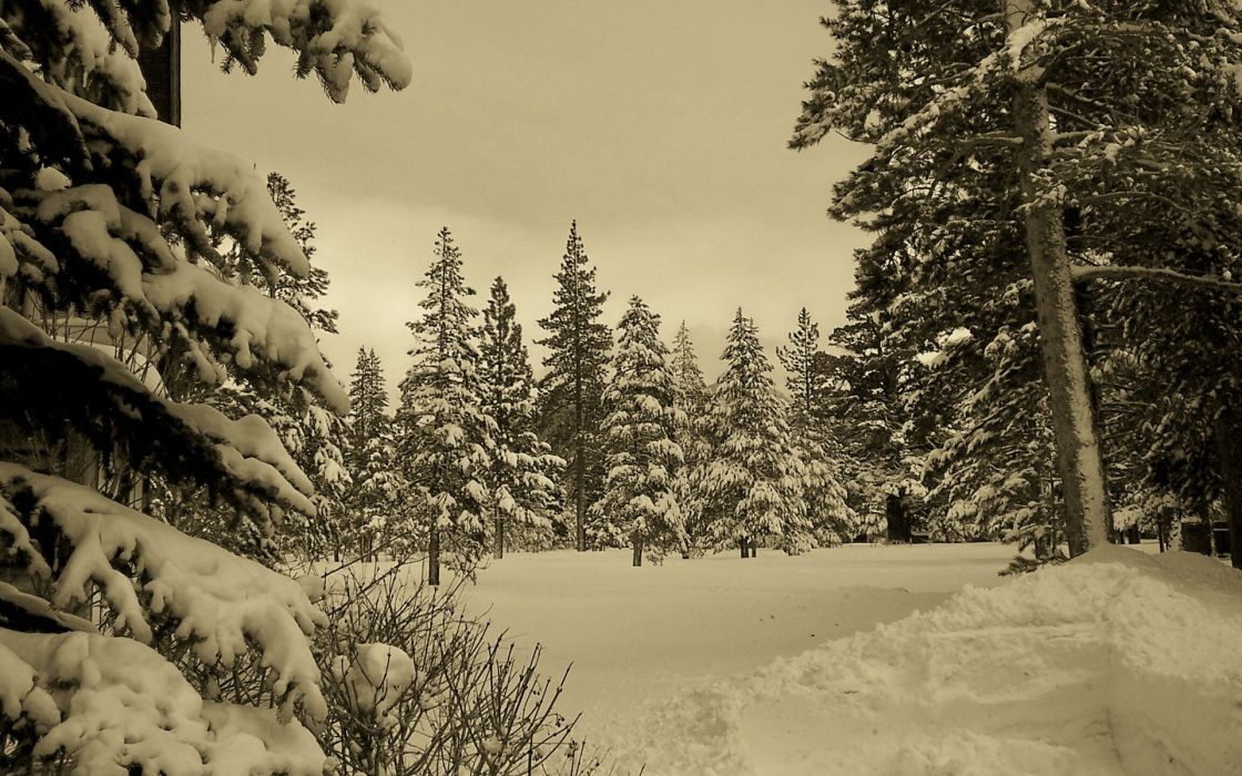 nature landscapes trees forests mountains winter snow seasons sky sepia wallpaper