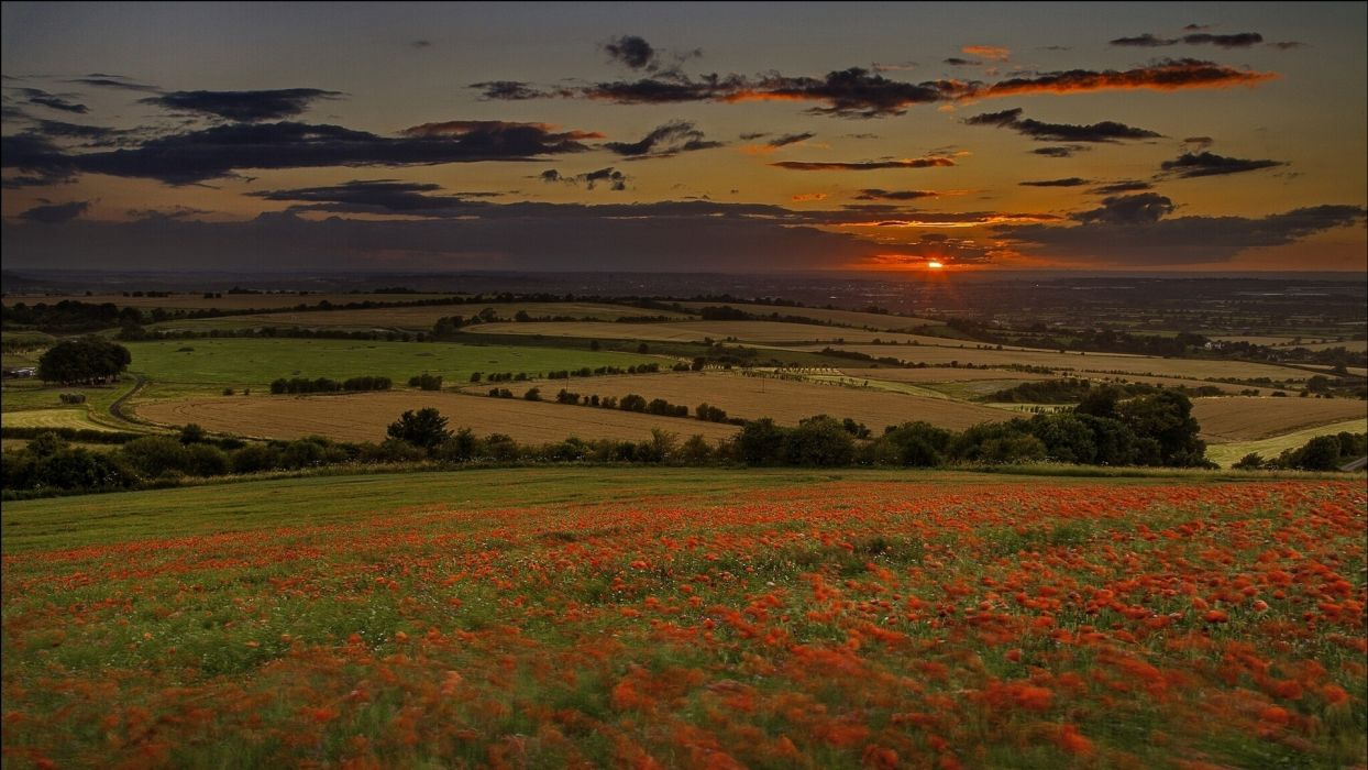 nature landscapes hills fields grass flowers farm land trees scenic view sky clouds sunrise sunset color panorama wallpaper