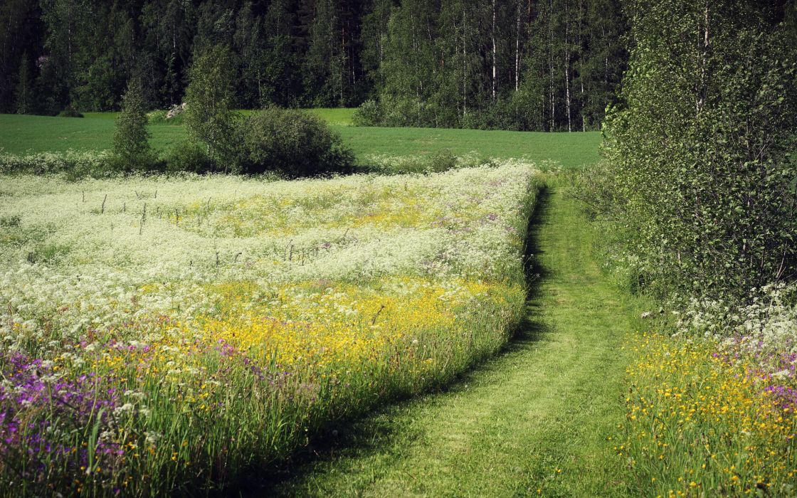 nature landscapes fields grass flowers trees forests green meadow spring seasons wallpaper