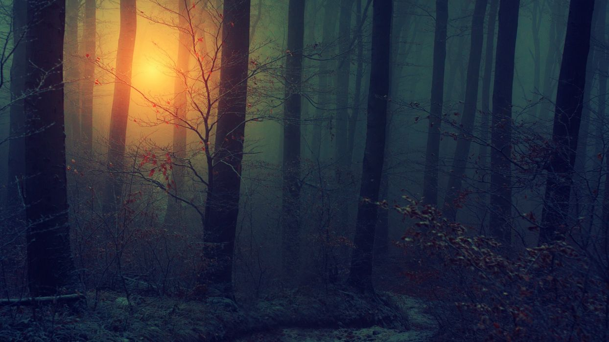 nature landscapes trees forests wood floor leaves autumn fall seasons sun sunlight sunrise sunset fog mist haze dark mood leaves spooky bark wallpaper