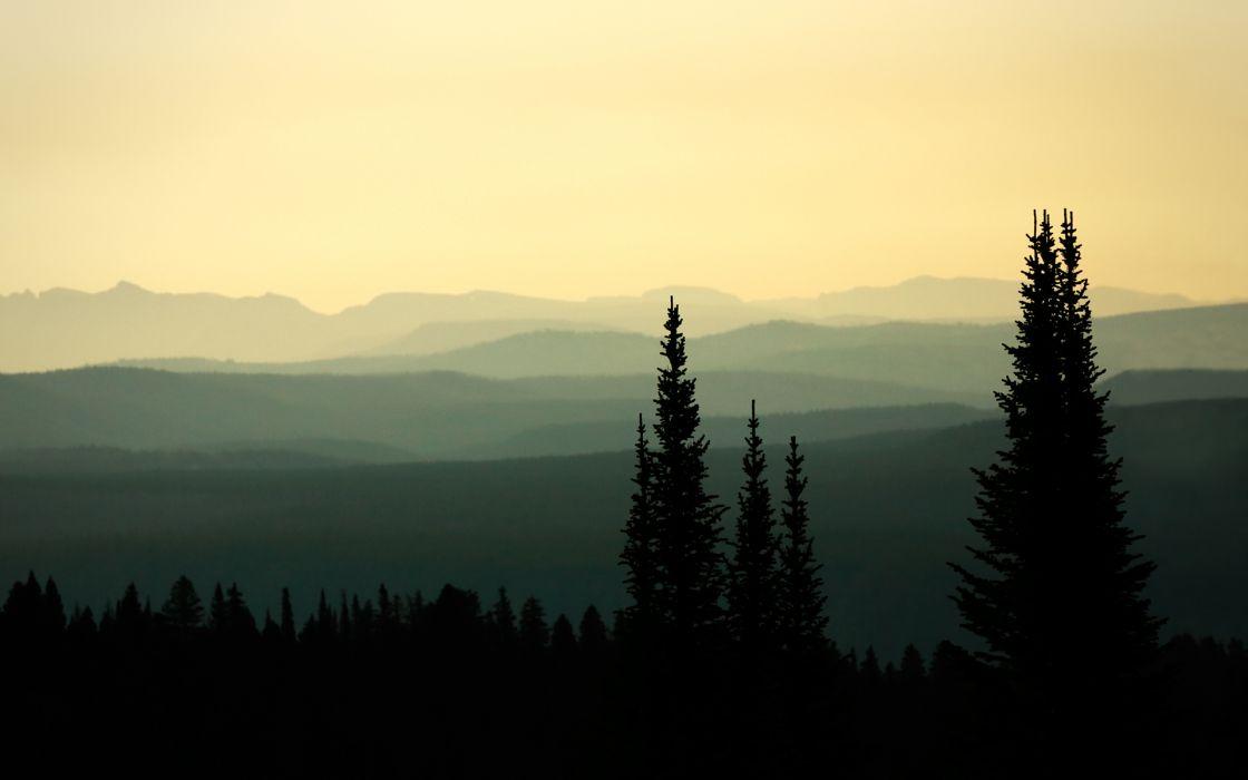 nature landscapes trees forests sky haze fog scenic wallpaper