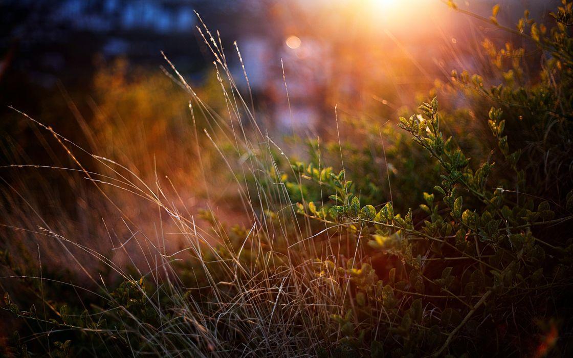 nature landscapes plants grass garden macro close up sun sunlight sunrise sunset wallpaper