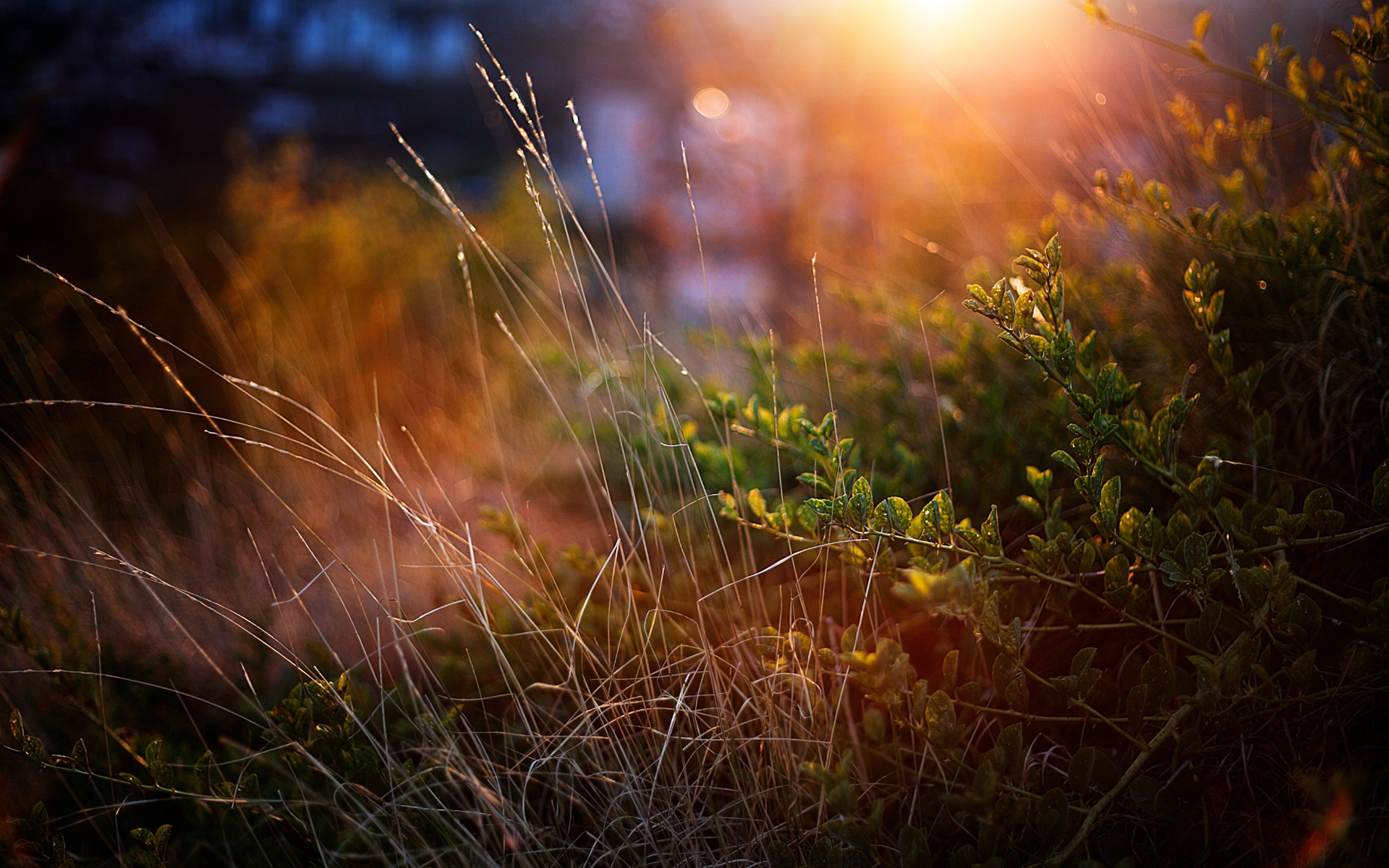 Nature Landscapes Plants Grass Garden Macro Close Up Sun Sunlight Sunrise  Sunset Wallpaper | 1920x1200 | 25610 | WallpaperUP