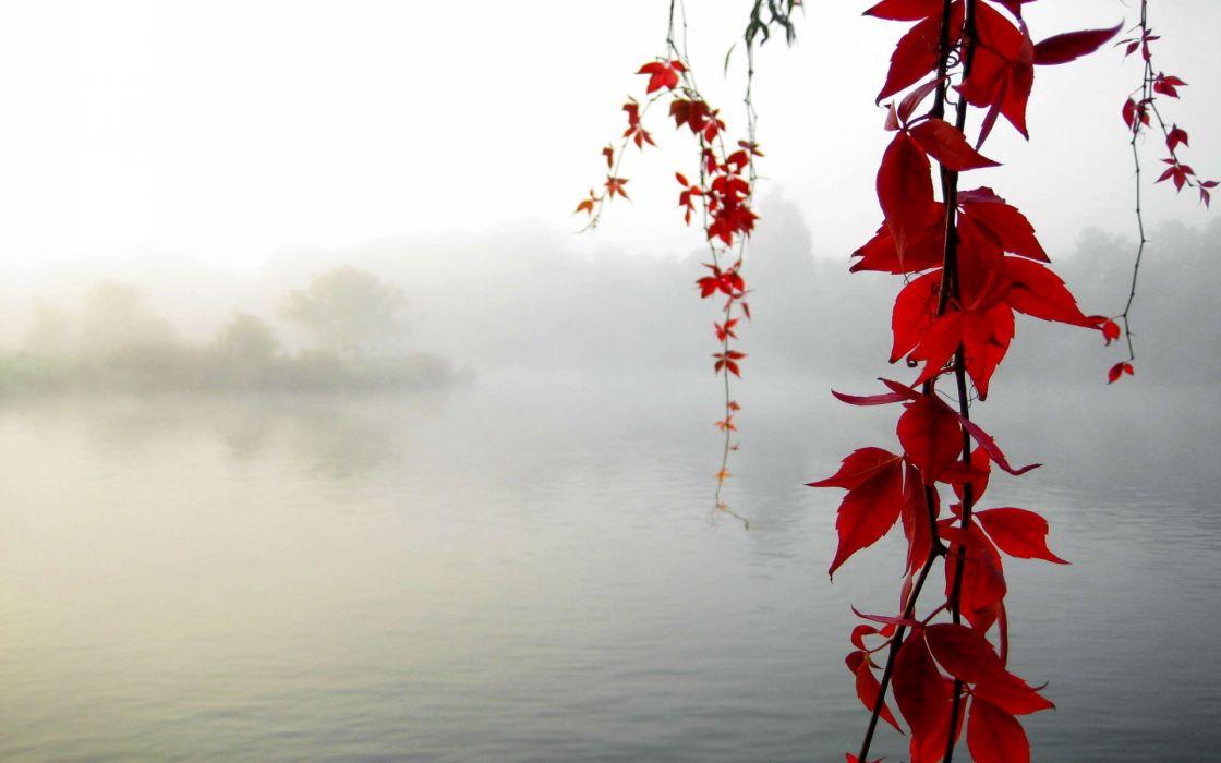 nature leaves autumn fall seasons maple branch lakes pond morning fog mist haze islands trees wallpaper