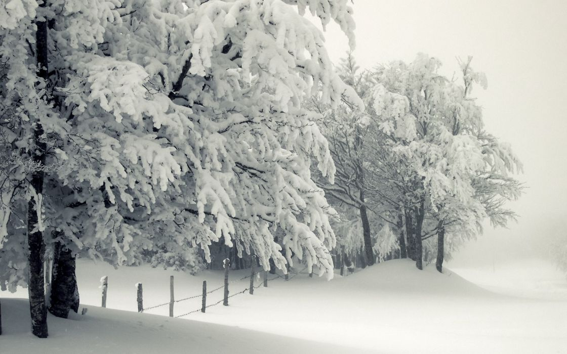 nature landscapes winter snow seasons cold freezing white trees fields fence storm wallpaper