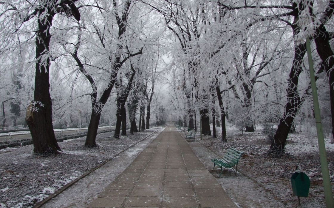 nature landscapes winter snow frost seasons park garden path sidewalk roads bench trees cold freezing ice wallpaper
