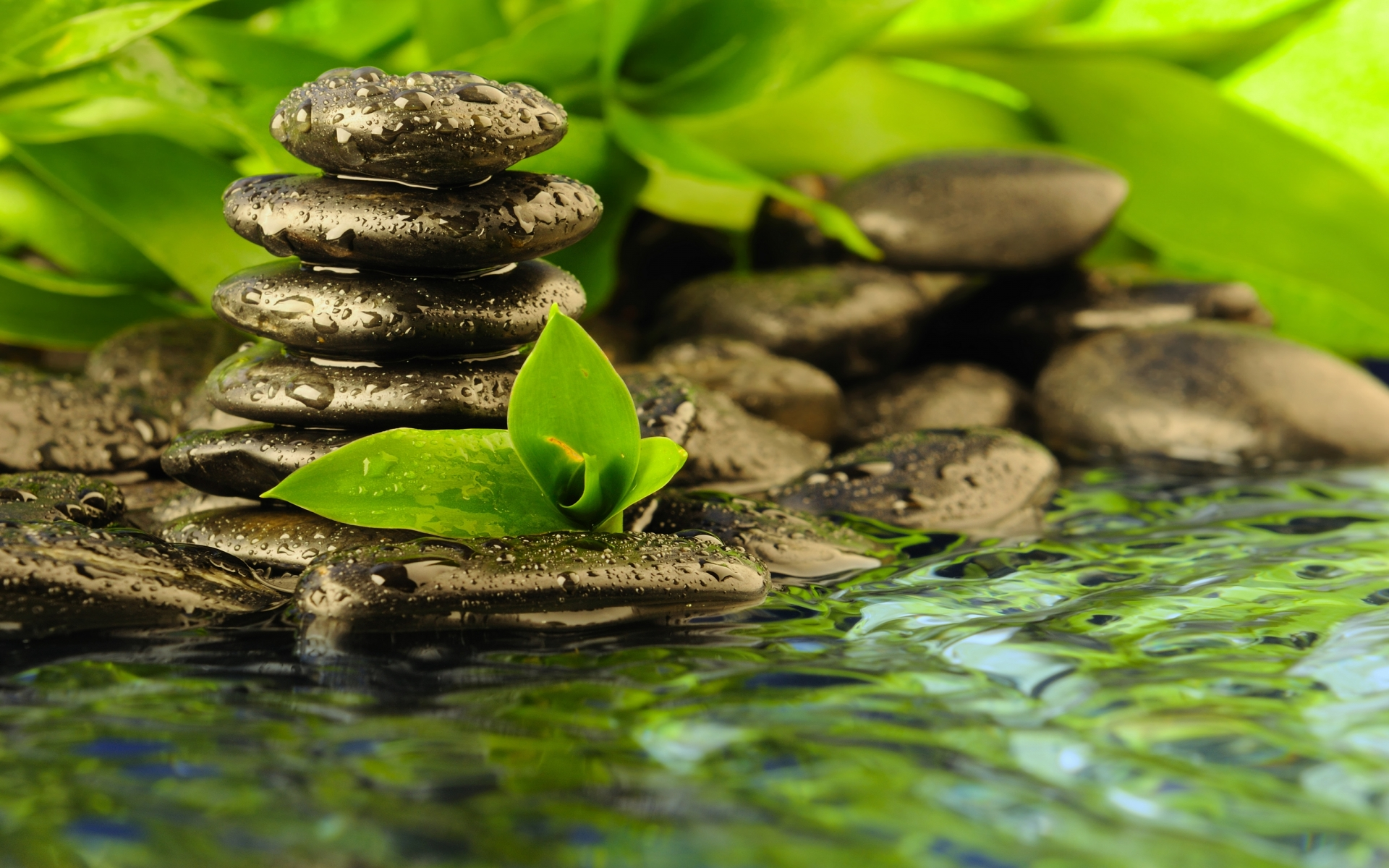 Zen Religion Peace Solitude Water Reflection Rocks Drops Leaves Contrast Asian Oriental Wallpaper