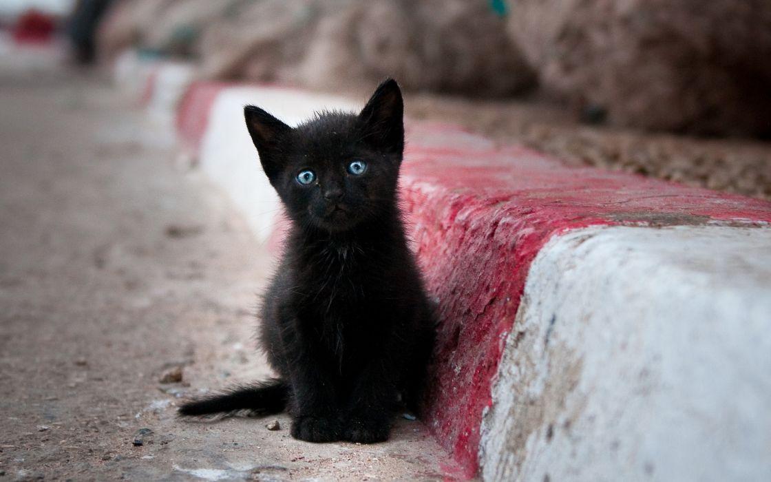 animals cats kittens feline roads street fur whiskers face eyes wallpaper