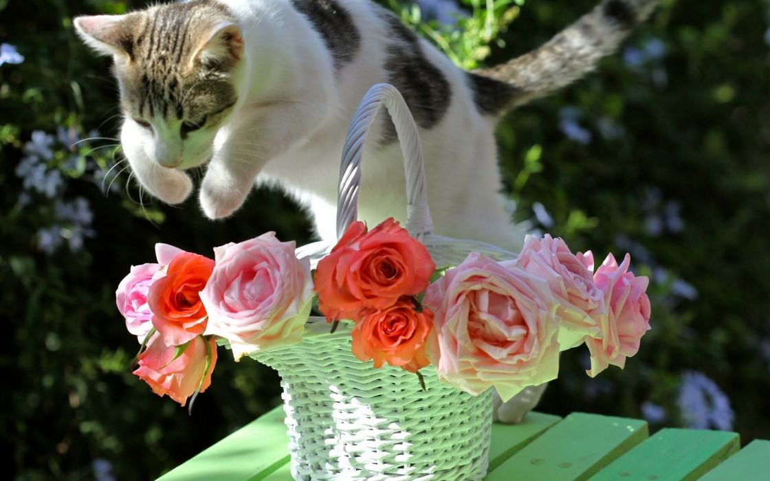 animals cats feline fur whiskers motion jump action flowers vase bouquets wallpaper
