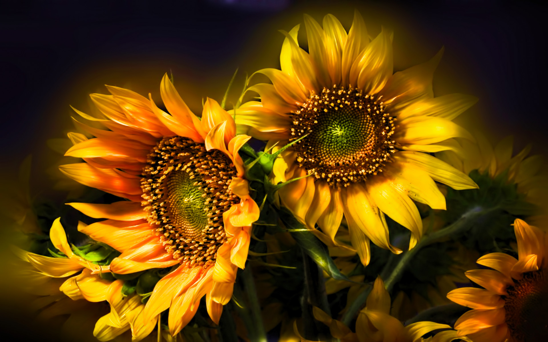 Nature flowers still life bouquets sunflowers seed petals ...