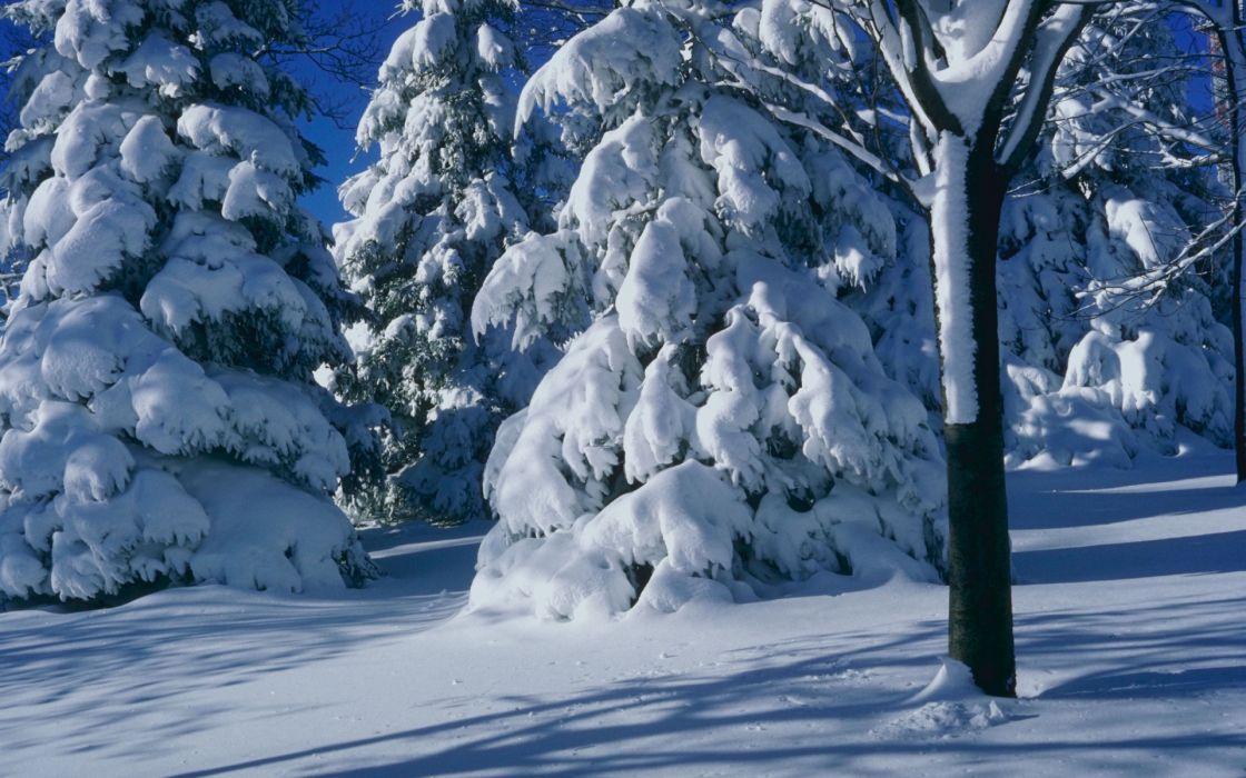 nature landscapes trees forest snow seasons white cold freezing wallpaper
