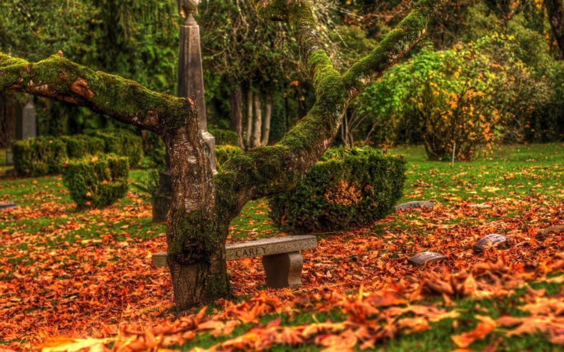 nature landscapes trees fields grass park garden gothic dark mood emotion sad sorrow bench cemetary grave stone headstone rock leaves autumn fall seasons plants color wallpaper