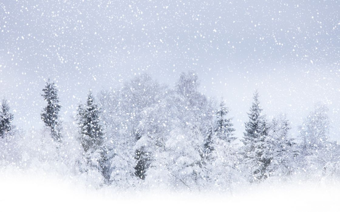 nature landscapes trees forest winter snow seasons snowing snowfall flakes blizzard storm white wallpaper