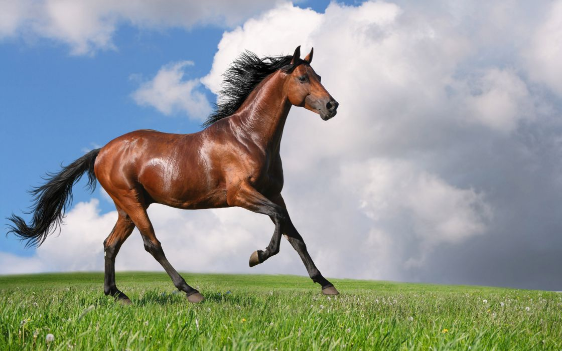 animals horses motion landscapes nature filds grass farm manipulation sky clouds wallpaper