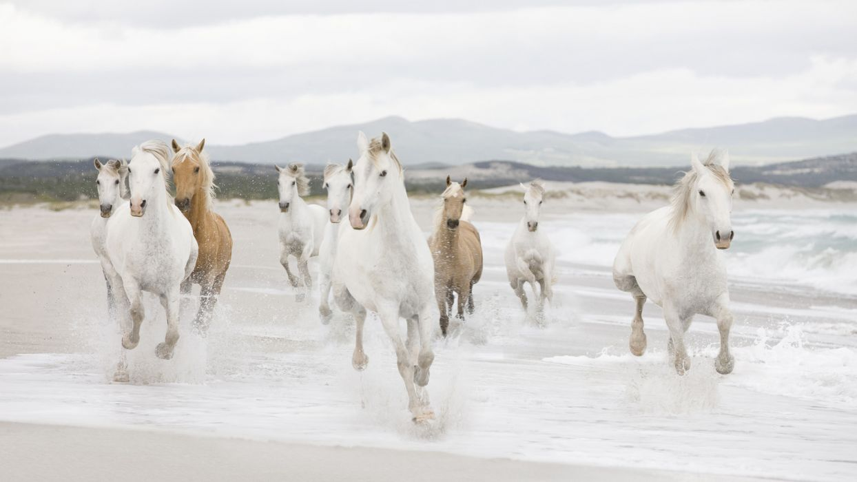 animals horses motion run fur hair mane nature landscapes beaches sand ocean sea waves foam dunes mountains sky clouds soft wallpaper