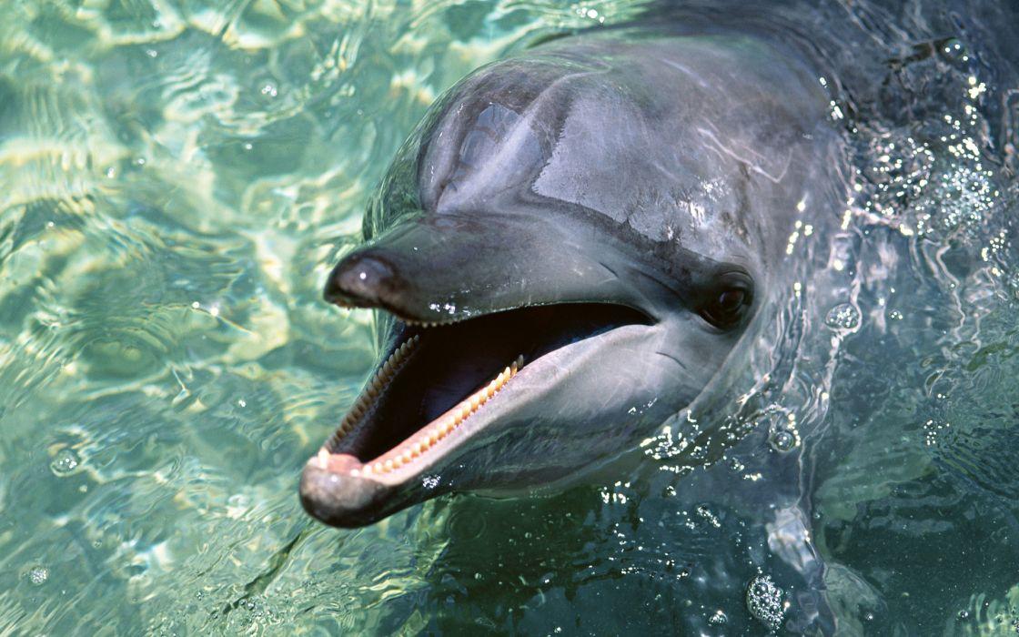 animals dolphins sealife pool aquarium water wet moth jaw teeth face eyes wallpaper