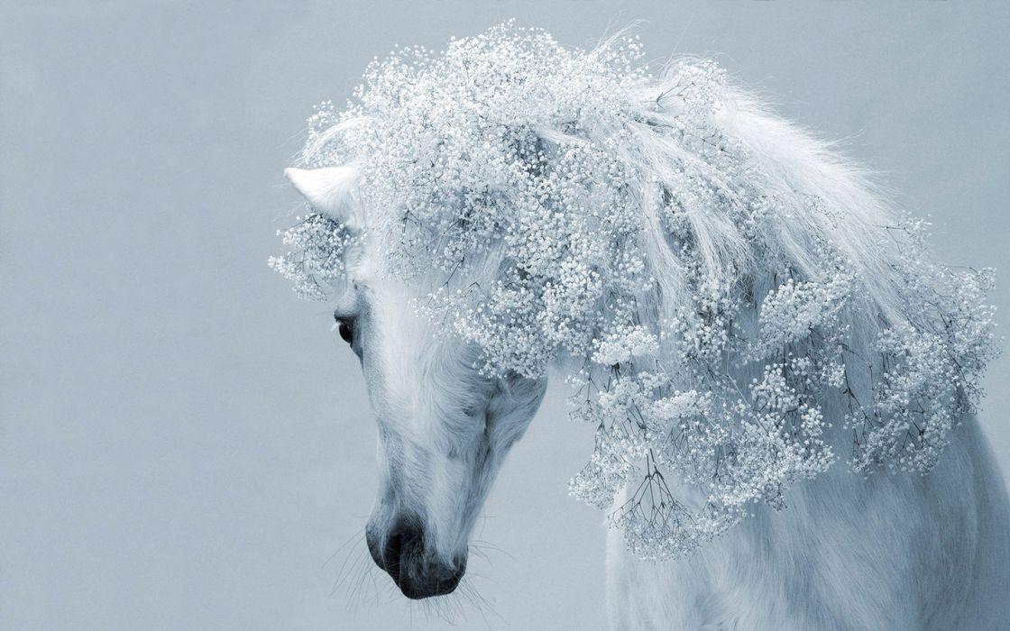 animals horses mane face eyes art white soft flowers wallpaper