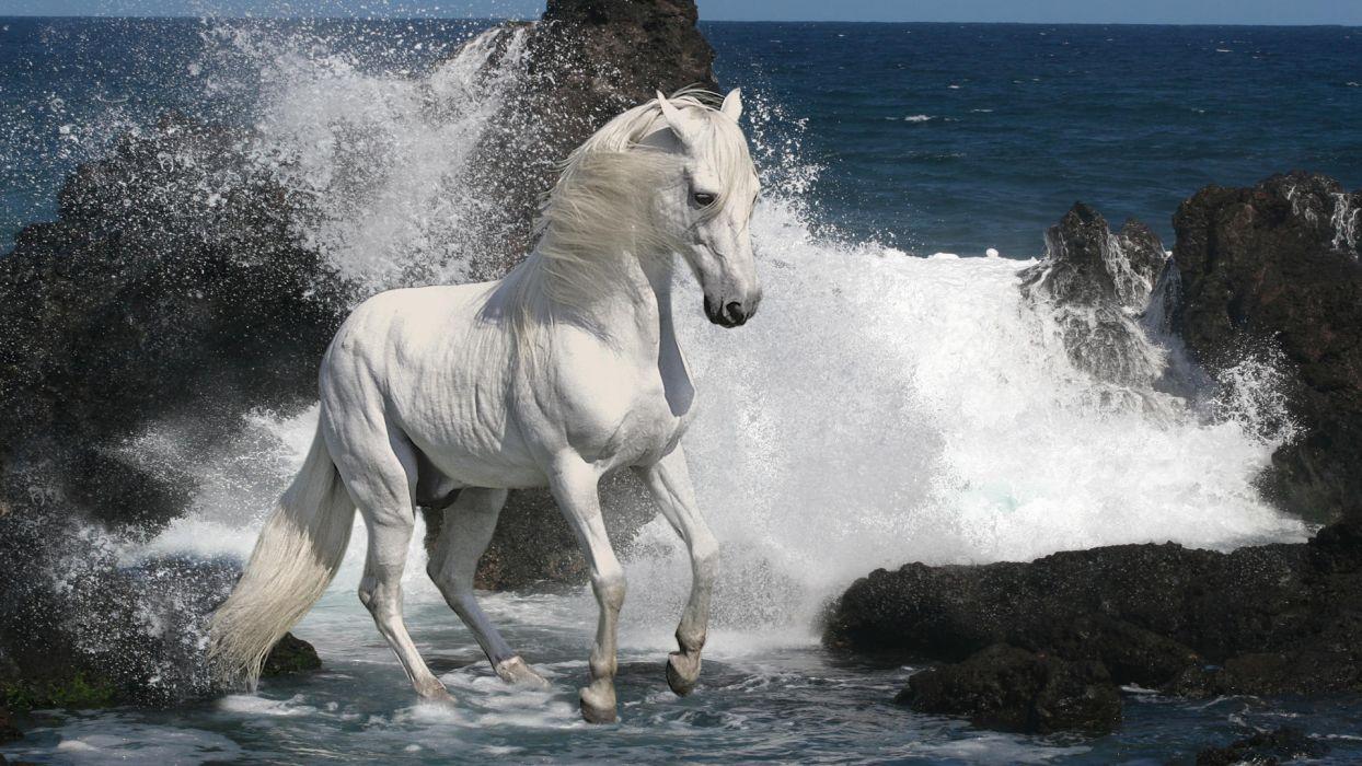 animals horses mane white bright majestic motion beaches nature ocean sea water waves drops splash rocks shore wallpaper