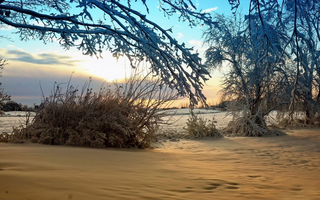 nature landscapes fields trees plants bush branch winter snow cold sky clouds sunrise sunset wallpaper