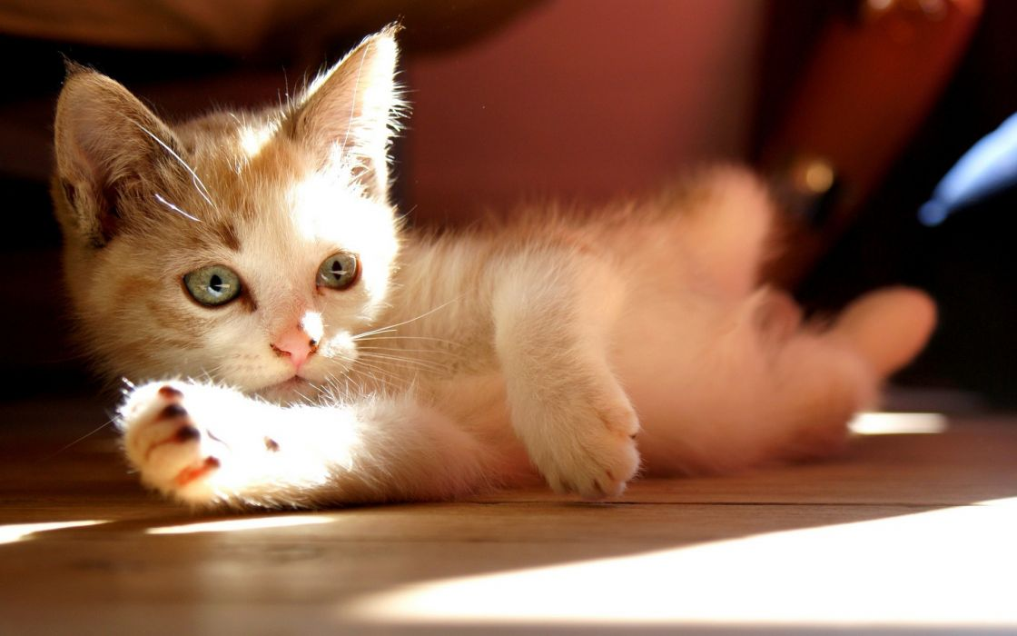 animals cats kittens cute babies face eyes whiskers paws light sunlight ray shade play wallpaper